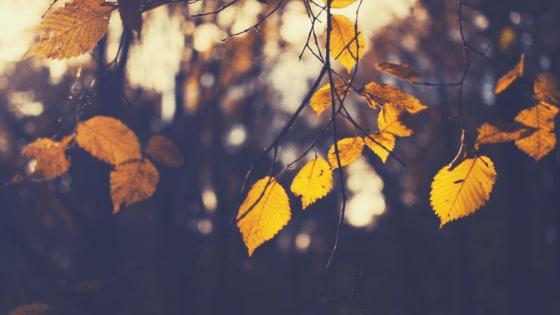 Orange leaves on a tree branch