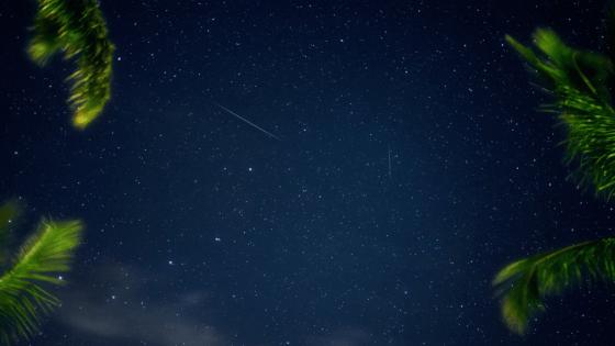 night sky framed by palm fronds