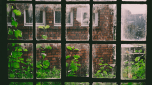 black window pane with ivy on brick building