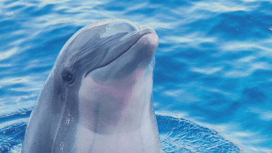 smiling dolphin peeking head out of water