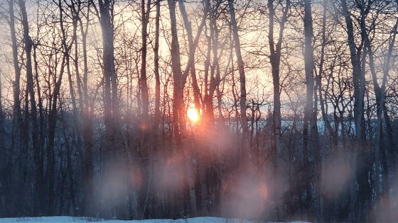 sunrise peeking over the horizon amid trees and lake