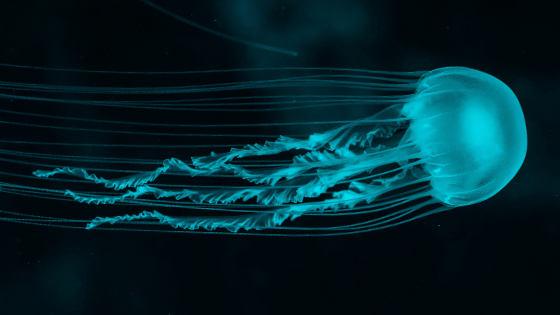 blue illuminated jellyfish floating against black background